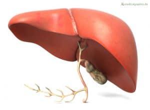 यकृत liver क्या हे इसके कार्य